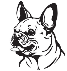 French bulldog black white vector