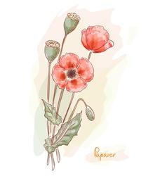 Poppy papaver watercolor vector