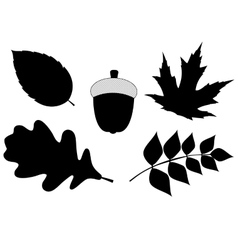 Acorn with leaves silhouette vector