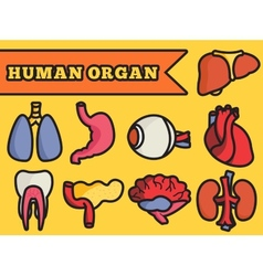 Set flat human organs icons concept backgro vector