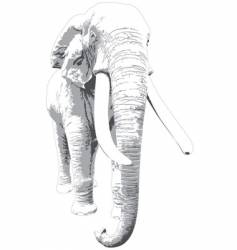Male african elephant vector
