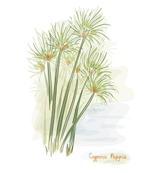 Papyrus plant watercolor style vector