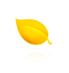 Yellow leaf on white background vector