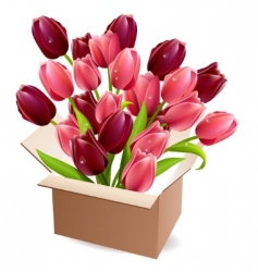 Open box full of tulips vector