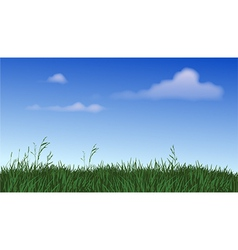 Panoramic field of grass vector