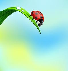 Ladybird on grass vector