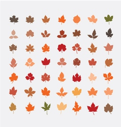 Color autumn leaves vector