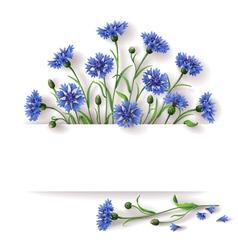 Cornflower banner vector