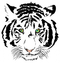White tiger vector