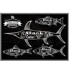 Diagram cut carcasses salmon swordfish herring tun vector