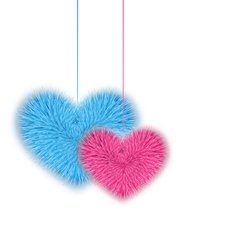 Fur pink and blue hearts for valentines day vector