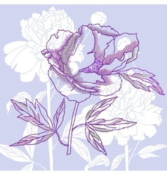 One peony on blue background vector