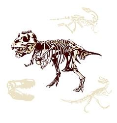 Paleontology vector