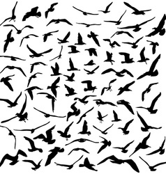 Seagulls black silhouette on white background vector