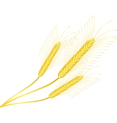 Three ears of wheat on white vector