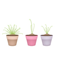 Three cyperus papyrus plant in ceramic flower pots vector