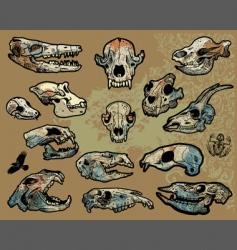 Animal skulls vector