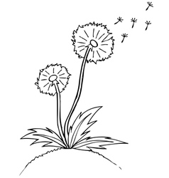 Dandelion black outline sketch vector
