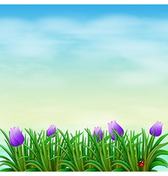 A garden with violet flowers vector