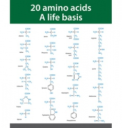 Amino acids vector