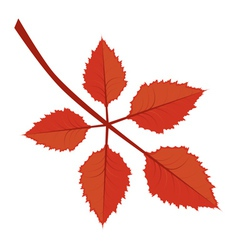 Branch with autumn leaves vector