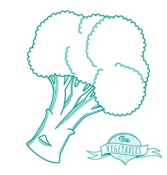 Outline hand drawn sketch of broccoli flat style vector