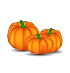 Fresh orange pumpkin isolated on white background vector
