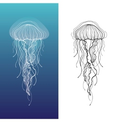 Jellyfish1 vector