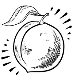 Doodle peach vector