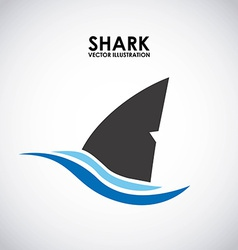 Shark design vector