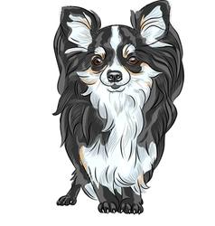 Dog chihuahua vector