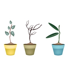 Fresh green and dry plants in flower pots vector