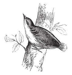 Eurasian nuthatch vintage engraving vector