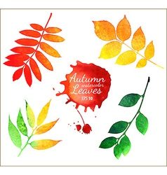 Watercolor autumn leaves collection vector