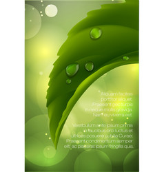 Dew drops on green leaves vector