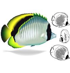 Lined butterflyfish set vector