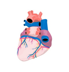 Heart organ retro vector