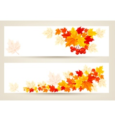 Two autumn banners with color leaves vector
