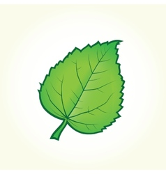 Green leaf isolated vector