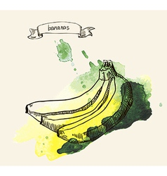 Sketch of bananas vector