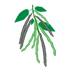 Delicious fresh mung beans on a plant vector