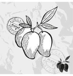 Hand drawn decorative mango vector