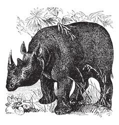 Rhinoceros vintage engraving vector