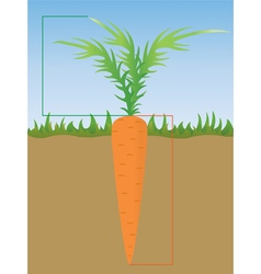 Carrot grows in the ground vector