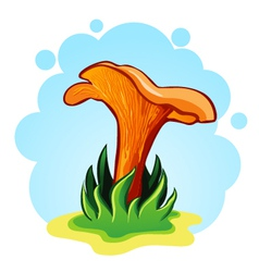 Chanterelle mushrooms vector