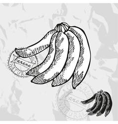 Hand drawn decorative banana vector