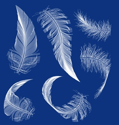 Flying white feather vector
