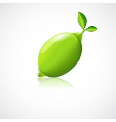 Lime fruit icon vector
