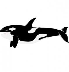 Orca killer whale vector