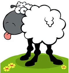 Black sheep sticking out his tongue on a hill vector